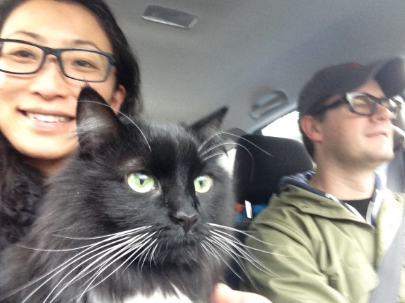 猫とドライブ